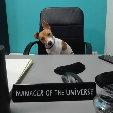 giummo manager